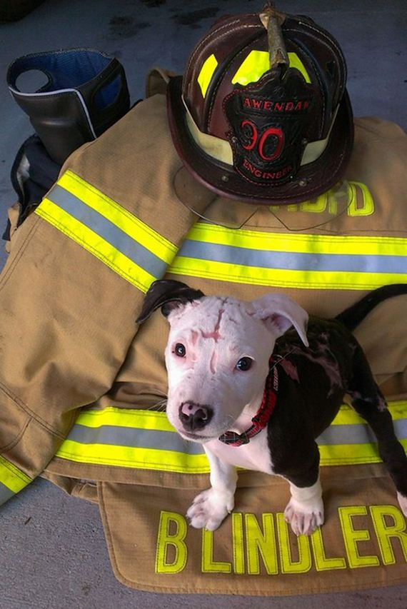 firefighter-dog-burn-victim