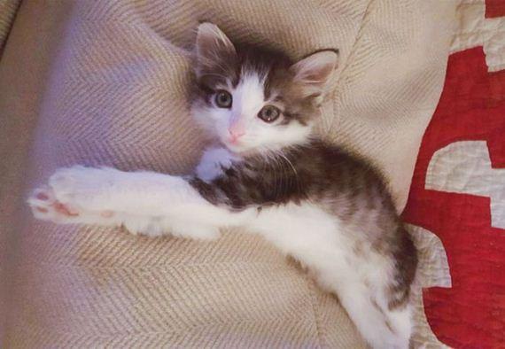 found_scared_kitten