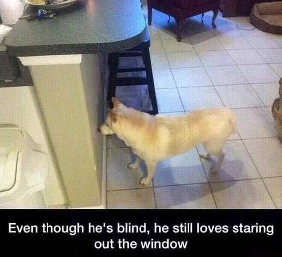 funny-pictures-1231