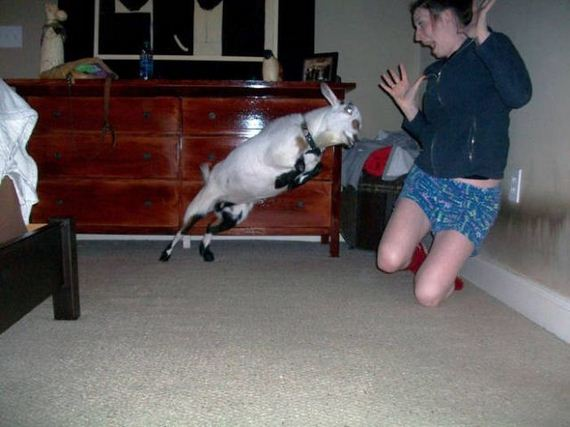 funny-pictures-1233