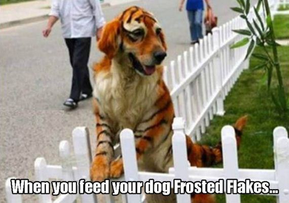 funny-pictures-1249