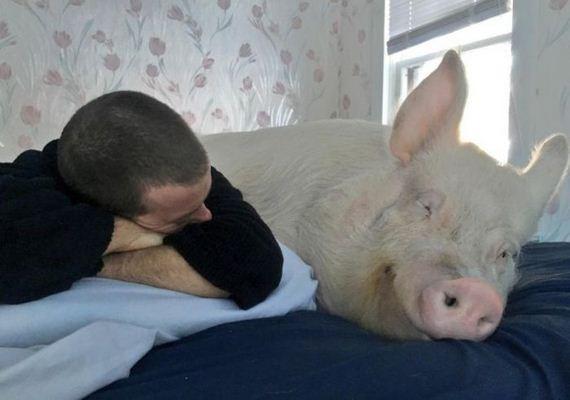 home_pig