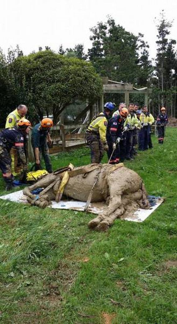 horse_rescue_mission