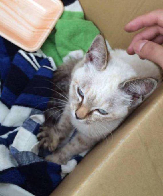 kitten_3-25