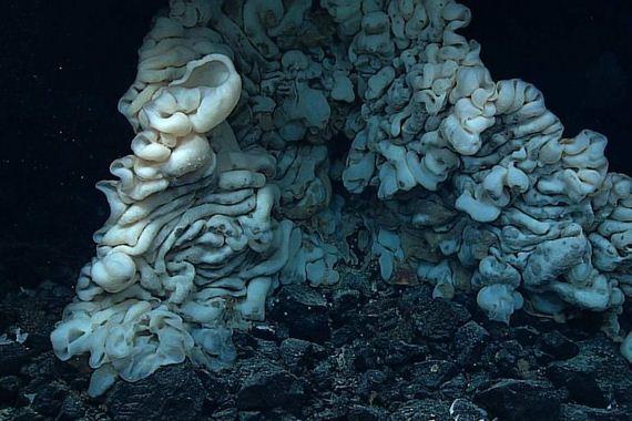 largest_sea_sponge