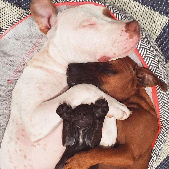 rescue_dogs