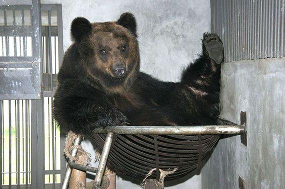 rescued_bear