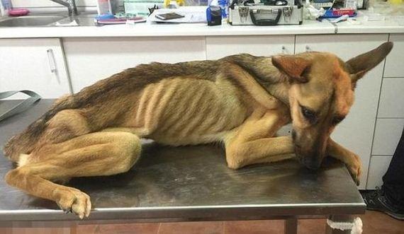 rescued_dog