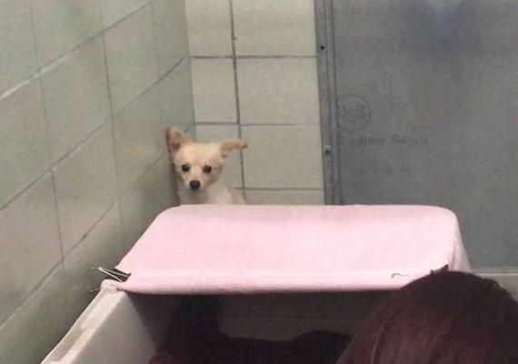 scared_dog