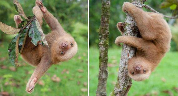 sloth_institute_in_costa_rica