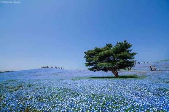 spring_in_japan