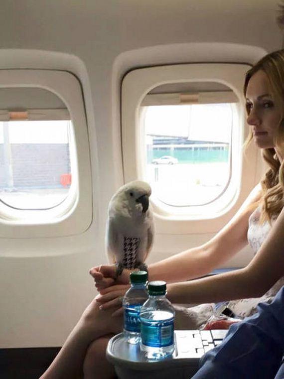 things_happen_on_a_flight