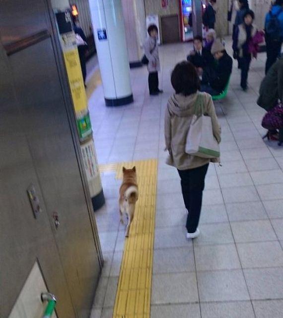 underground_dog