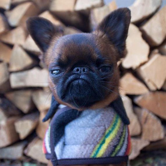 unhappy_dog