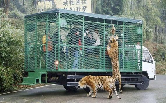 zoo_01