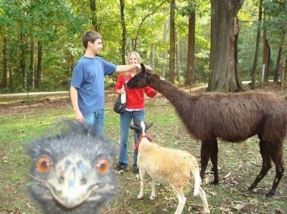 Animals-Photobombs