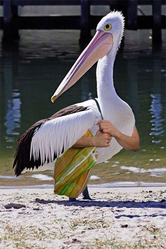 Birds-Human-Arms