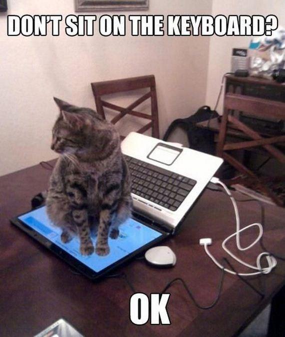 Cat-Memes
