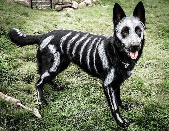 Dogs-Halloween