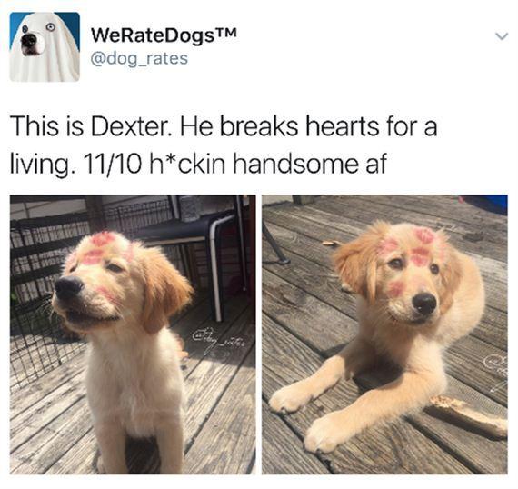 Dogs-Hilarious