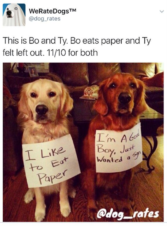 Dogs-Hilarious