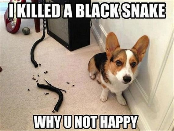 Funny-Dog-Pictures