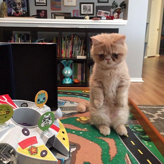 Meet-Human-Cat