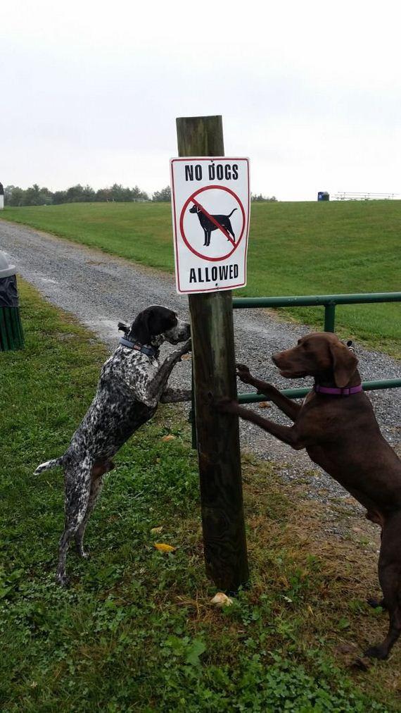 Rules-broken