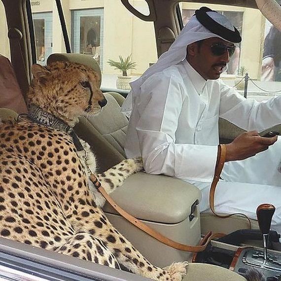 See-Dubai