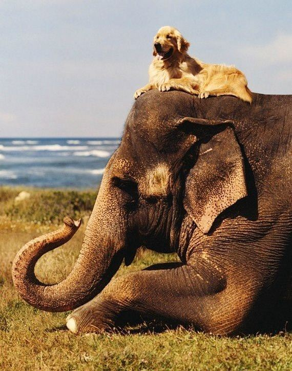 Unbelievable-Animal-Friendships