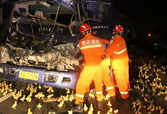 accident_with_ducklings