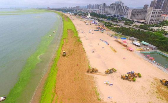 algae_china