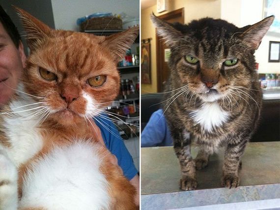 angriest_cats