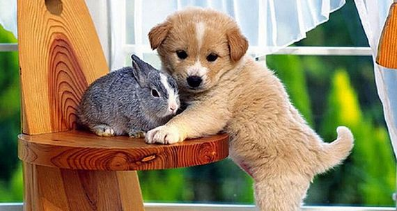 animal-cute-7-19