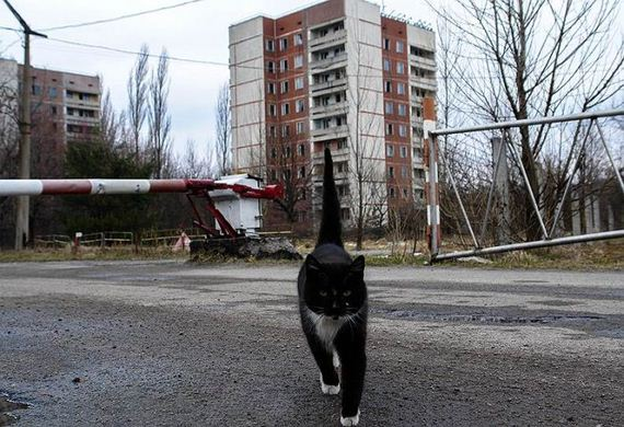animals_in_chernobyl