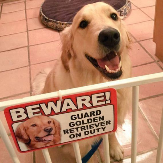 beware_of_dogs