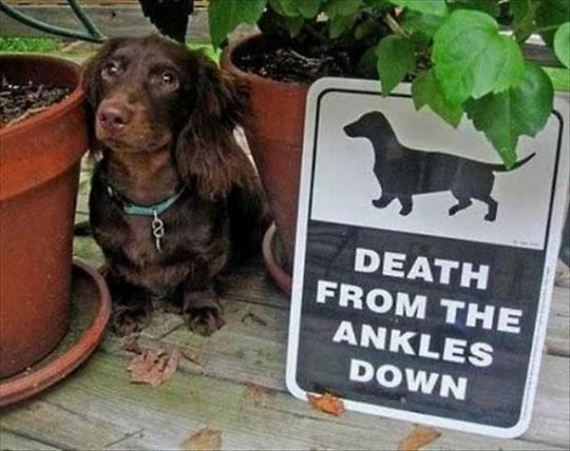 beware_of_the_dog_signs