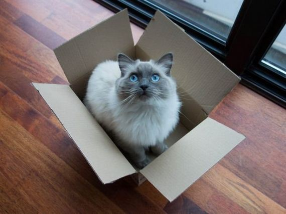 boxes-are-a-cats-only-weakness