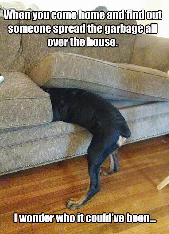 cat-made-a-mess
