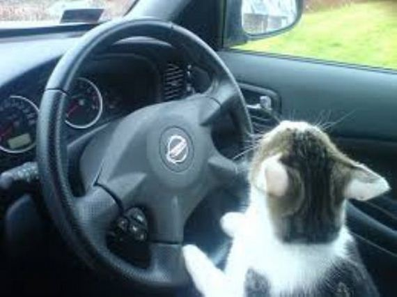 cat-road-trip-edition