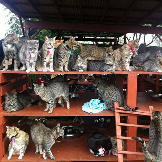 cat_sanctuary_in_hawaii_where_people