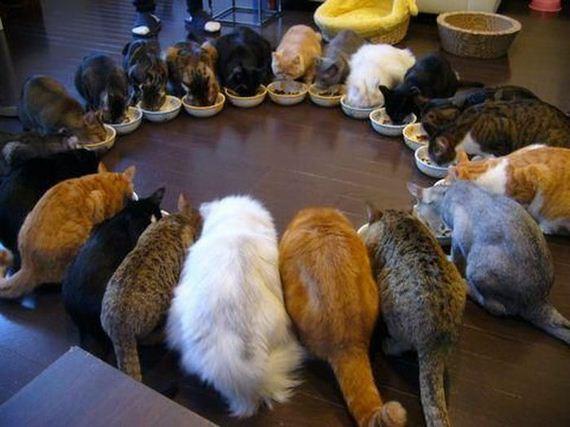 cats-10-13