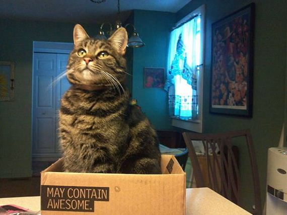 cats_and_boxes