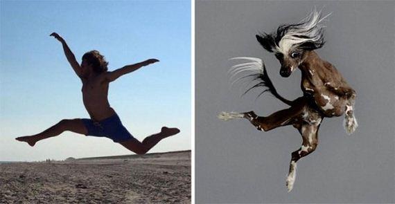 dog-doppelgangers-funny-alike