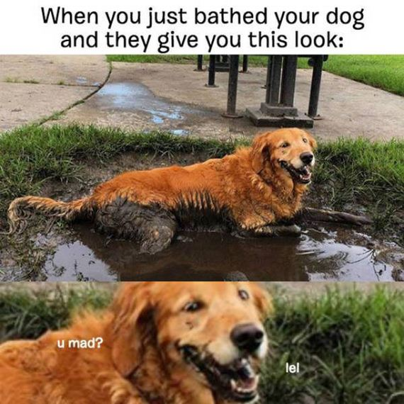 dog_can_relate