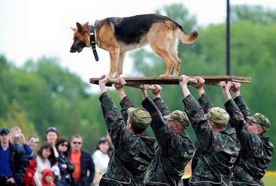 dogs-best-hero