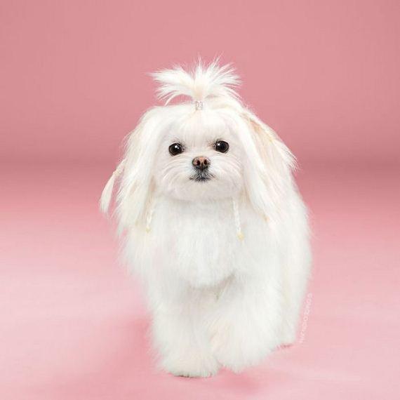 dogs_haircuts