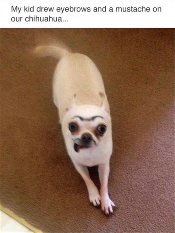 eyebrows-on-the-dog