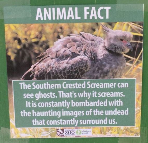 fake_animal_facts