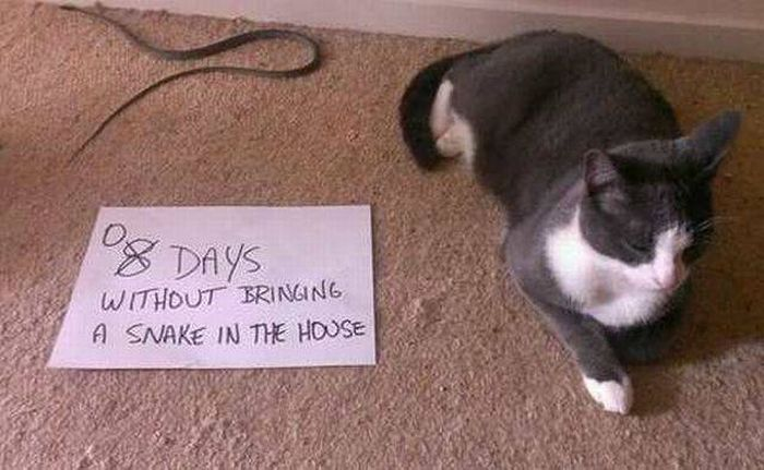 funny-pictures-1268